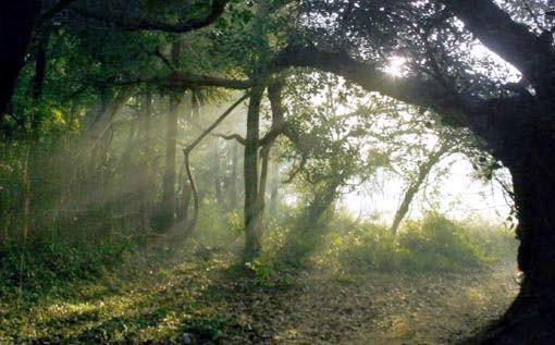 bosque que rodea auroville