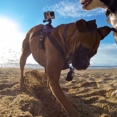 Las mejores mascotas (tecnológicas) para nuestros gatos y perros