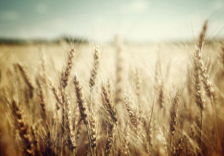 La teoría sobre el origen del pan siempre había estado ligado a la aparición de la agricultura
