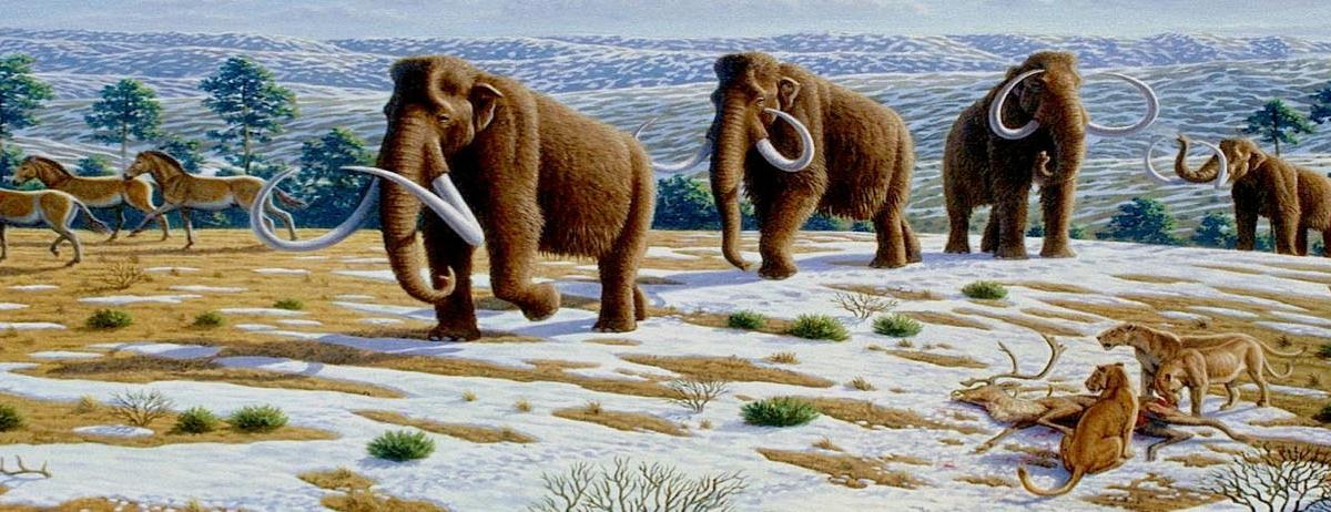 Si la desextinción funciona, animales con genes de mamuts podrían volver a poblar la tundra.