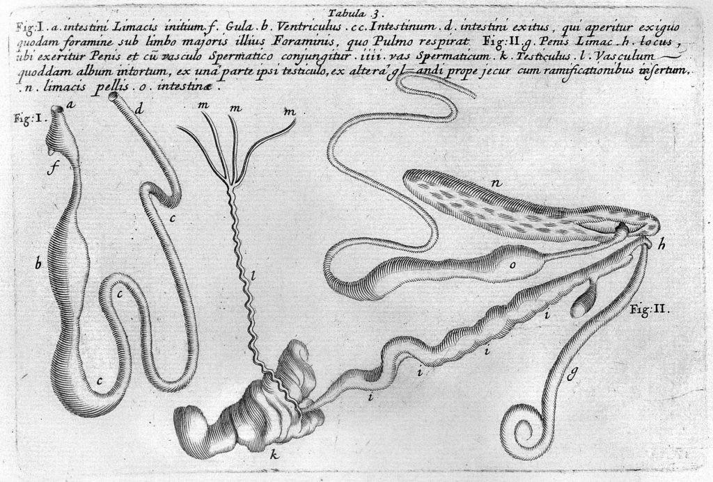 Las ilustraciones de Susanne y Anne Lister incluían minuciosas explicaciones
