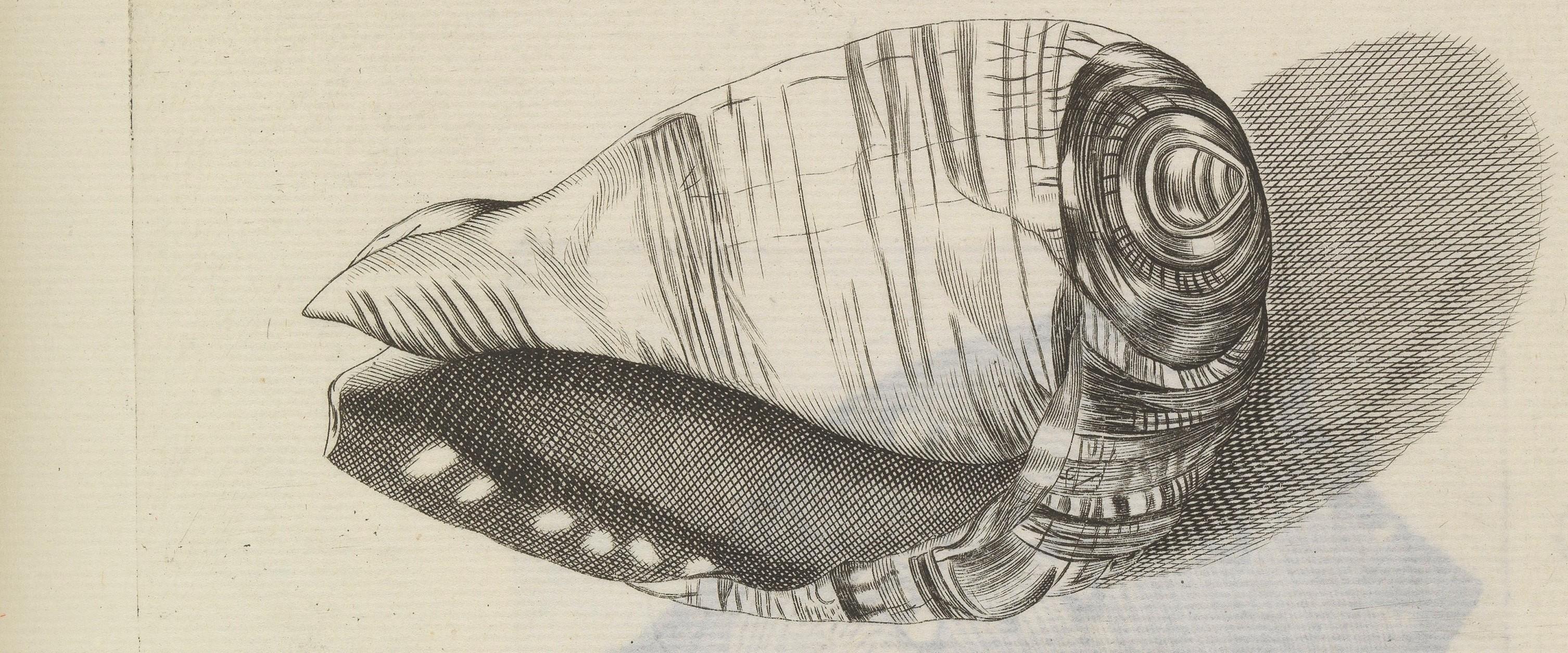 Las ilustraciones de Susanne y Anne Lister destacan por su rigurosidad científica y su precisión