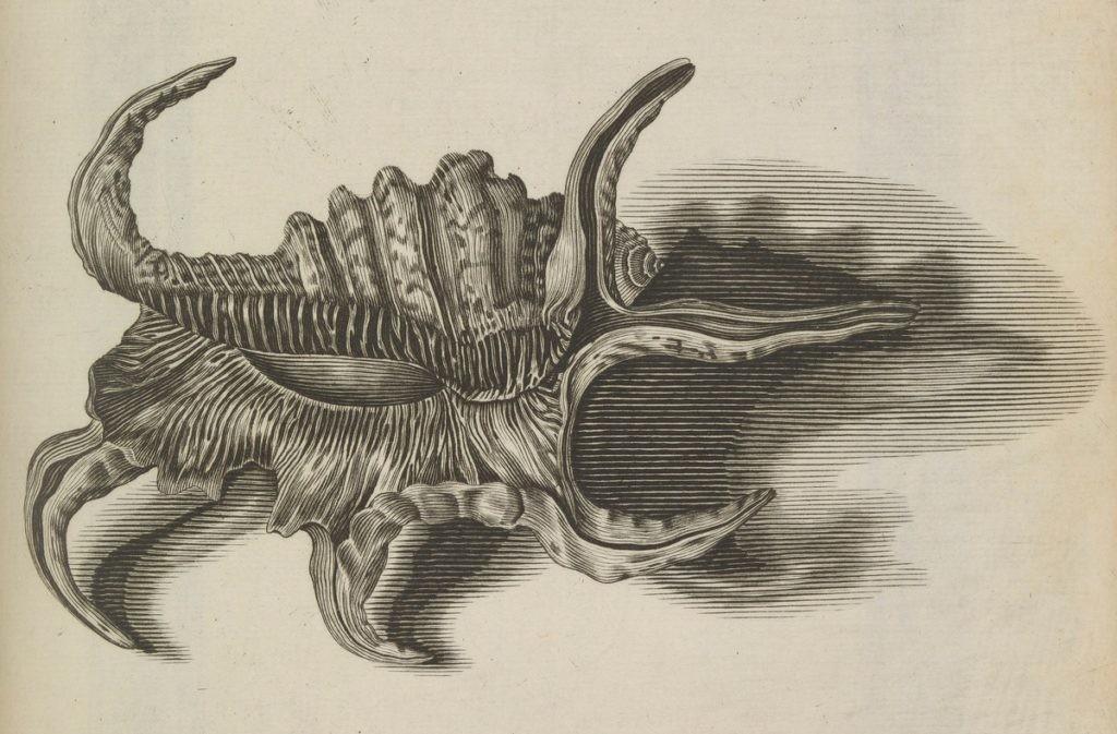Susanne y Anne Lister realizaron cientos de ilustraciones