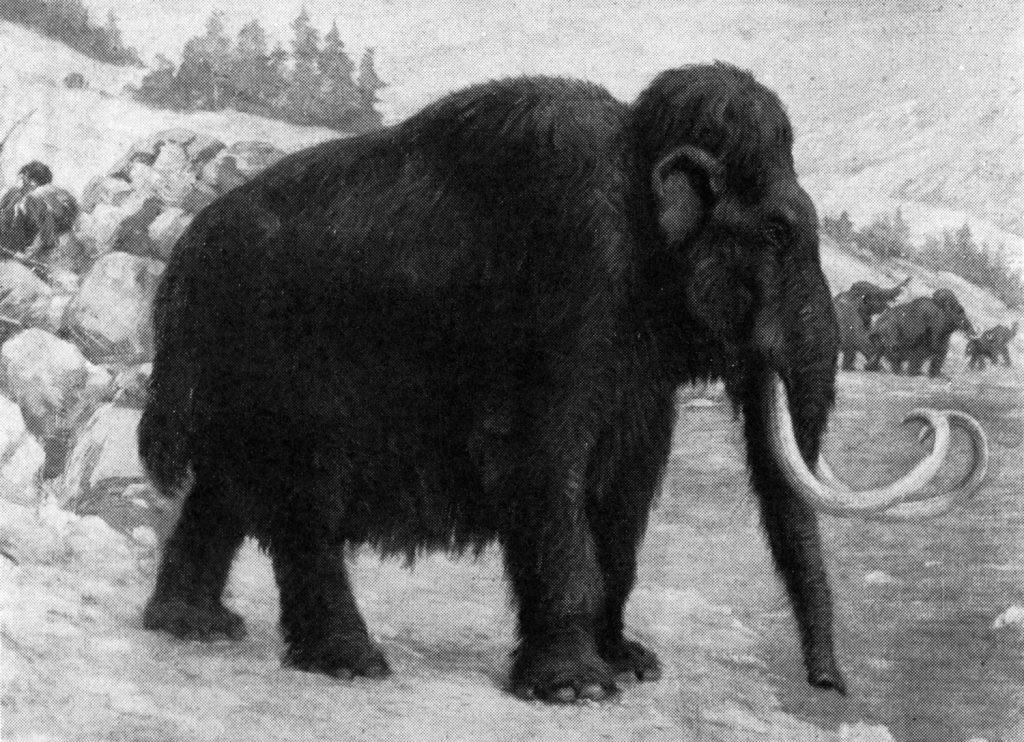El mamut lanudo era un poco más grande que los elefantes africanos actuales.