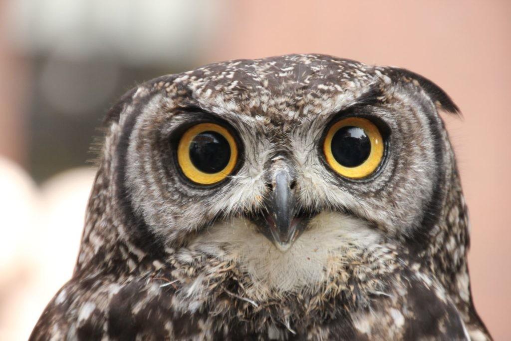 Las imágenes de animales sirven para estimular determinados pensamientos según nuestra personalidad y experiencias.