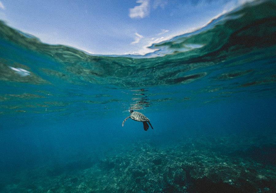 recuperación de ecosistemas