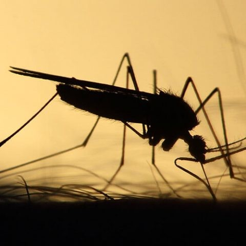 big data para prevenir epidemias