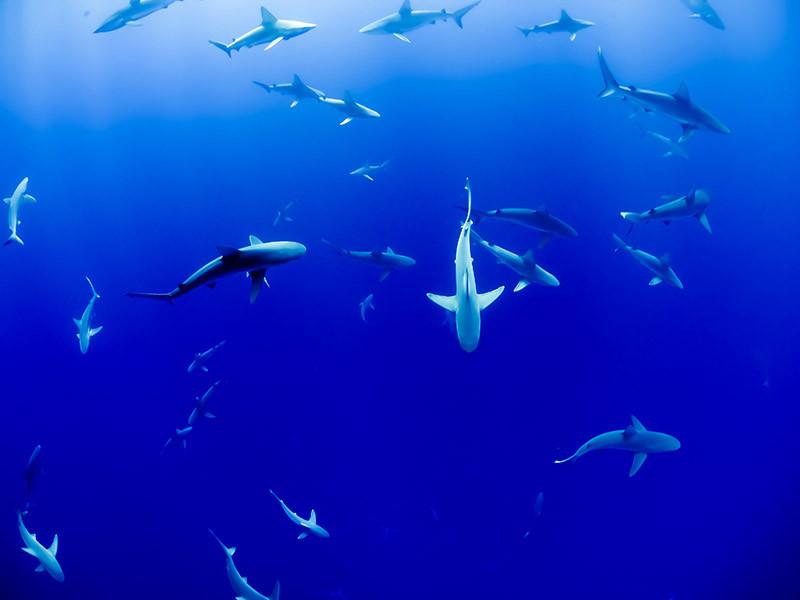 Las criaturas marinas también se verán afectadas por las consecuencias del cambio climático en los océanos.