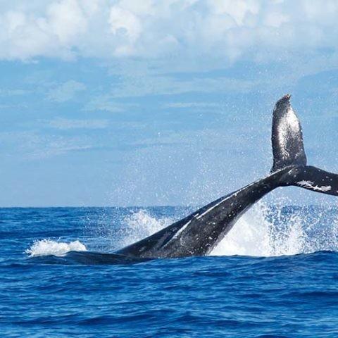 La memoria de las ballenas es fundamental en su búsqueda de alimento.