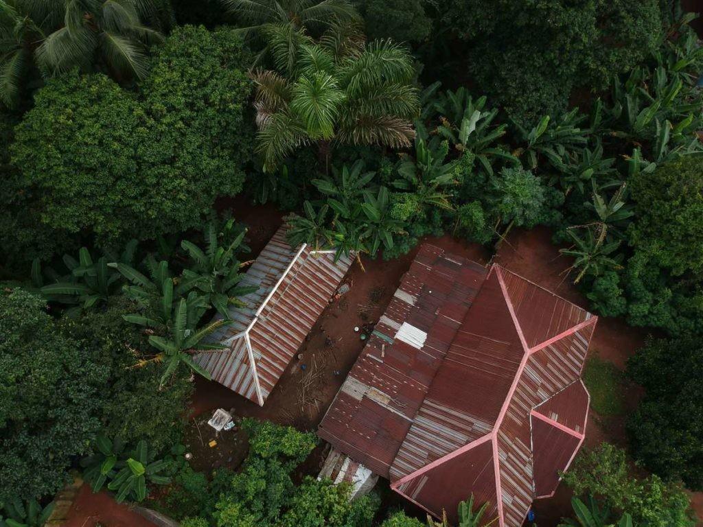 La reducción de su hábitat es una de las causas principales de la reducción de transmisión de conocimientos de los chimpancés.
