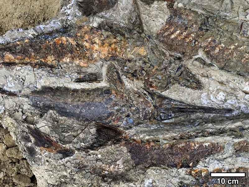 fósiles en Dakota del Norte