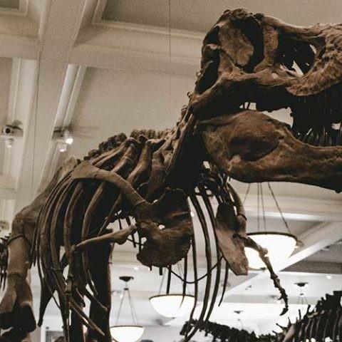 muerte de los dinosaurios