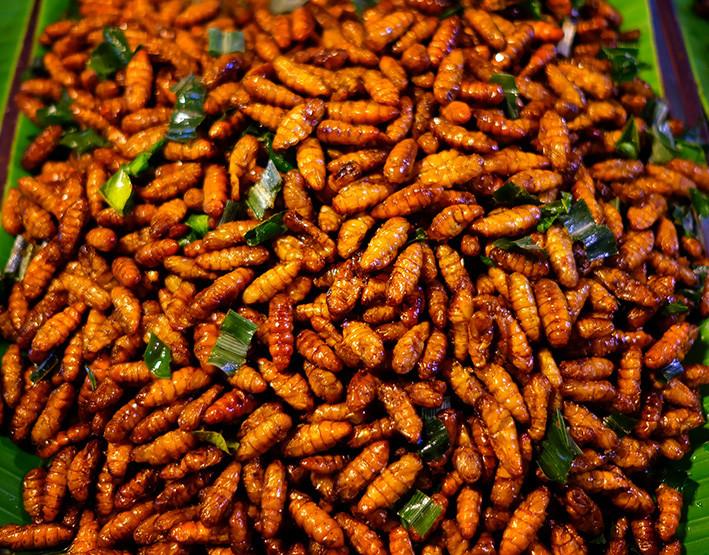 insectos comida eco coste