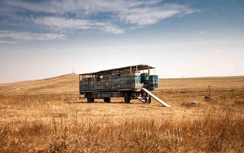 La desertificación puede acabar con áreas dedicadas al cultivo de cereal y otros granos.