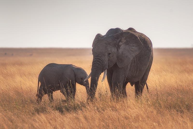 las respuestas humanas de los elefantes