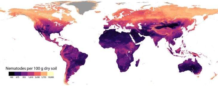 Los nematodos abundan más en las regiones subárticas, de clima frío.