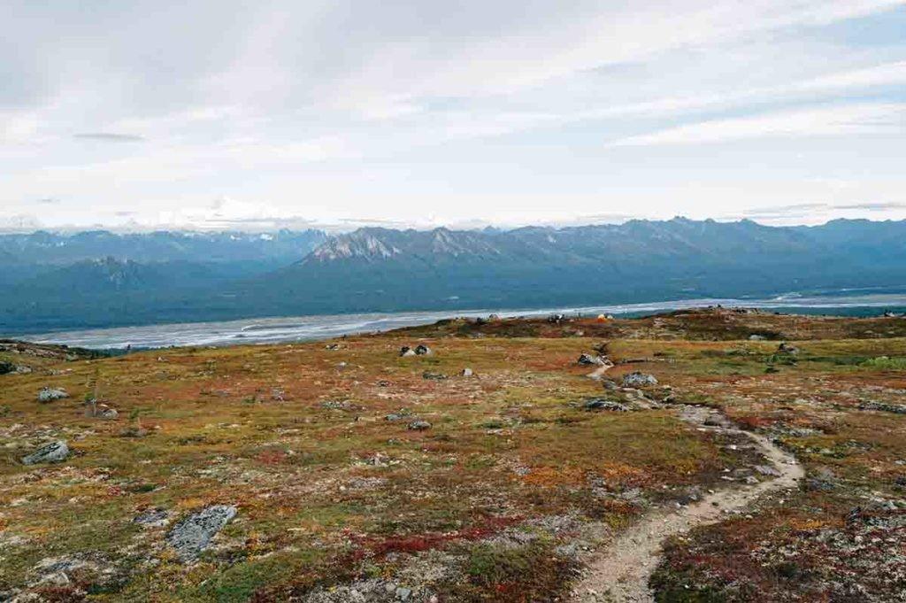 La tundra se caracteriza por una vegetación muy particular, exenta de árboles.