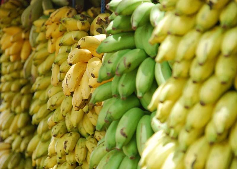 plagas en agricultura como plátanos