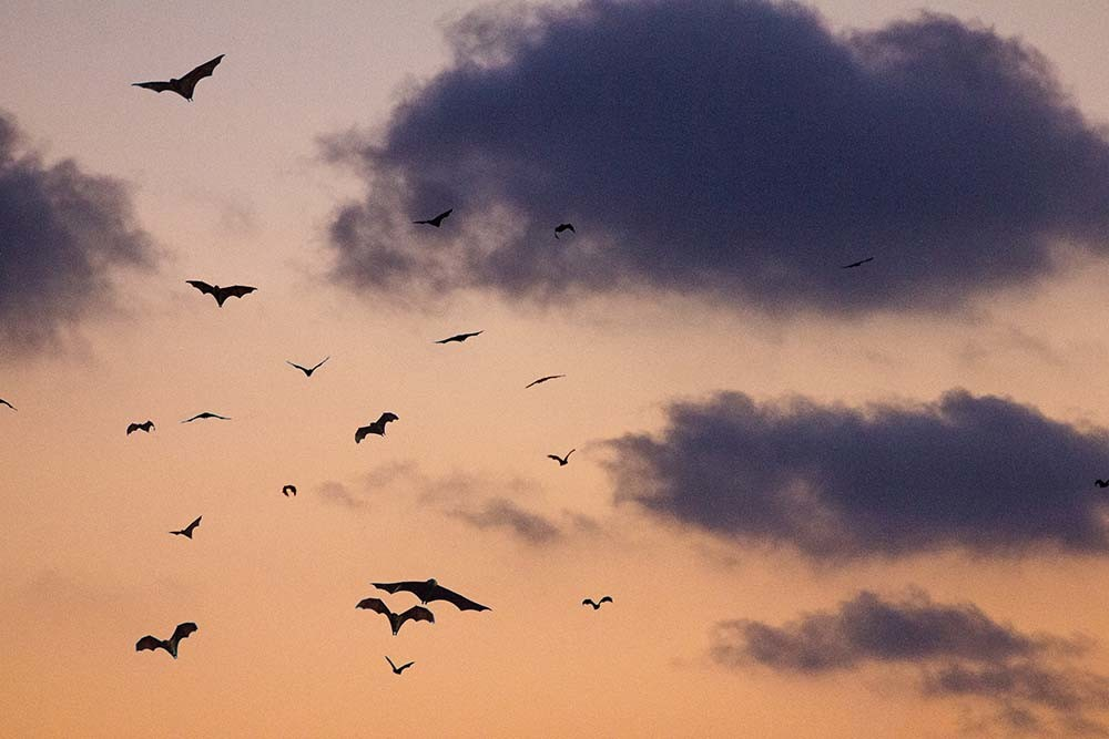 grupo de murciélagos volando al anochecer