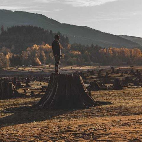 la deforestación avanza a nivel mundial
