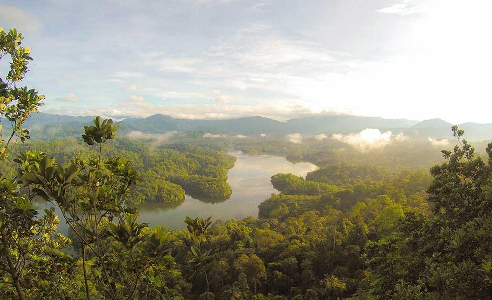 las selvas tropicales son claves para la biodiversidad