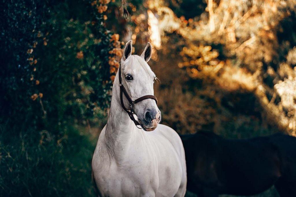 Existe una vacuna para prevenir las enfermedades causadas por el virus en caballos, pero no en humanos.