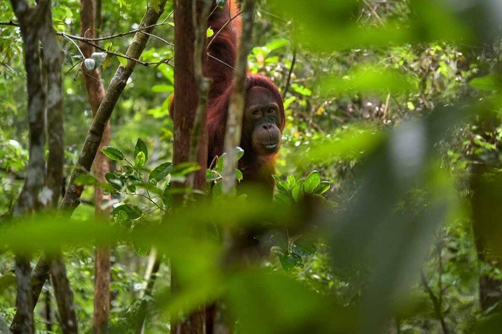 La actividad del ser humano pone en riesgo La conservación de los primates.