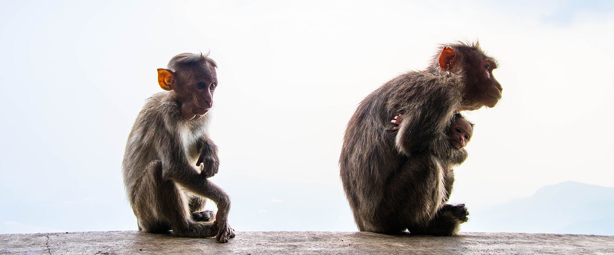 Retos y desafíos de la conservación de los primates.