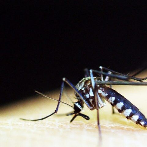 control de mosquitos con nuevas herramientas