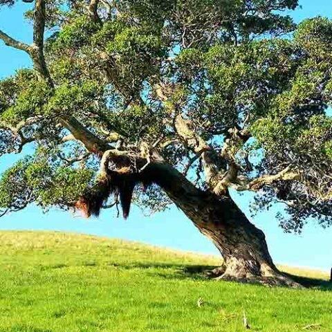 Un estudio realizado con árboles que se remontan a la época del imperio romano permite constatar los efectos del cambio climático en los últimos años.