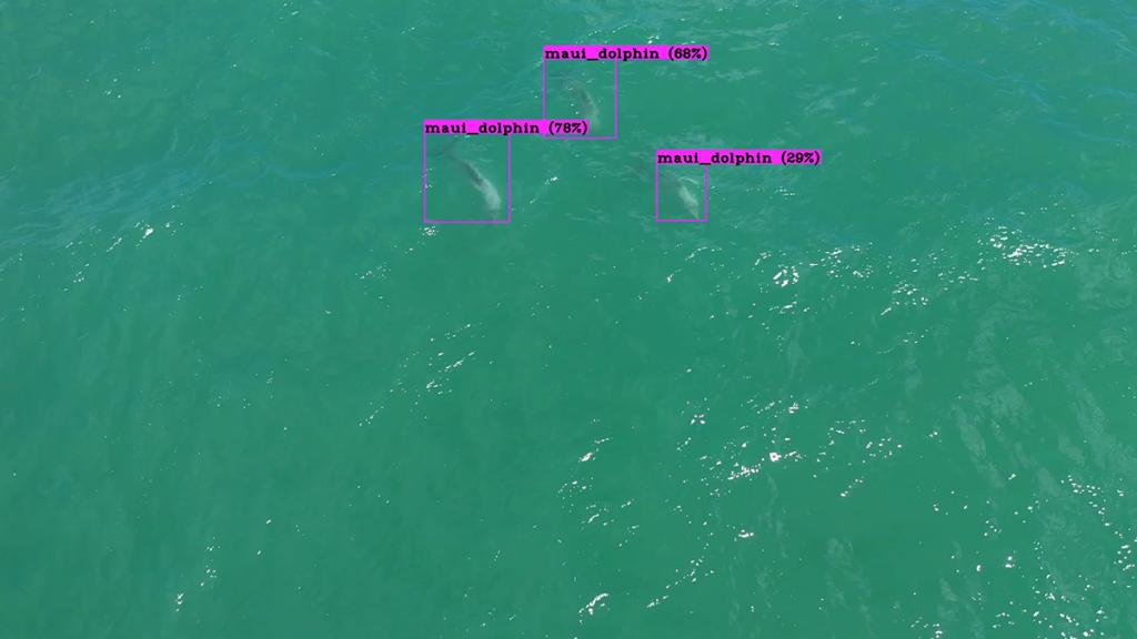 Māui63 ha desarrollado un dron de rastreo con inteligencia artificial capaz de encontrar y seguir a estos delfines.