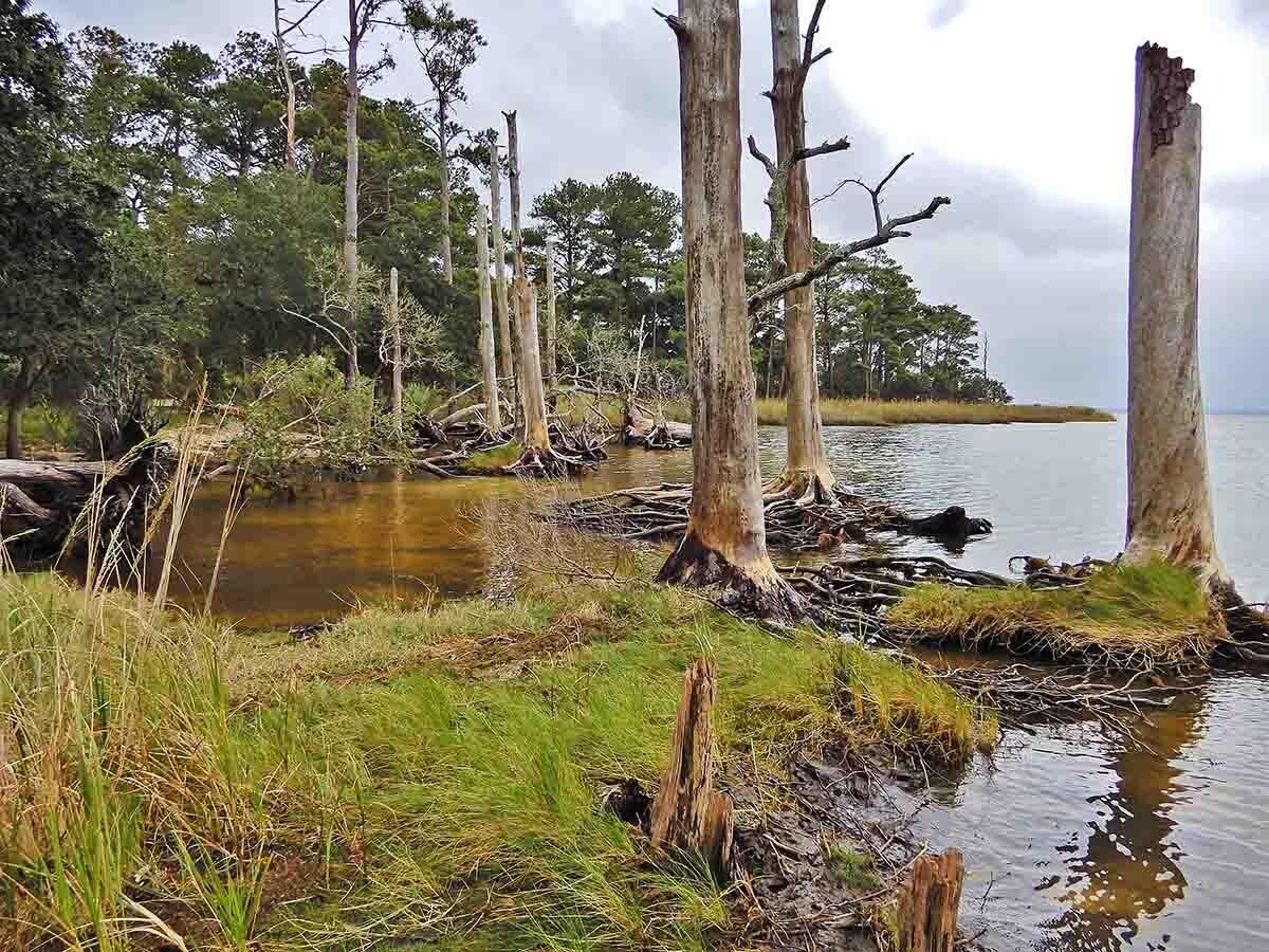bosque fantasma de Carolina del Norte