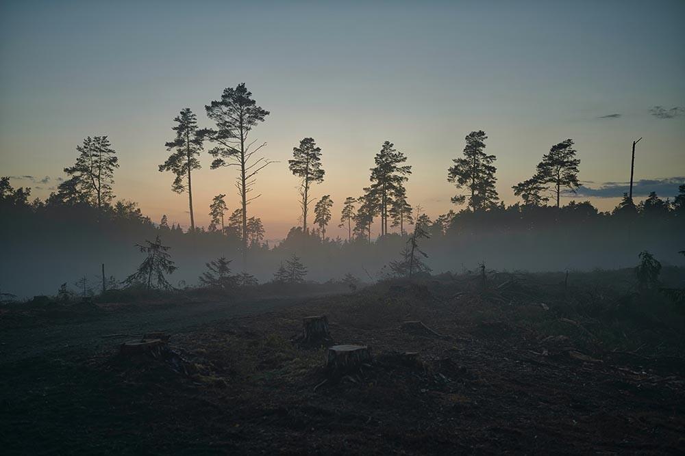 una imagen de deforestación actual
