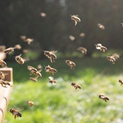 hoteles para abejas