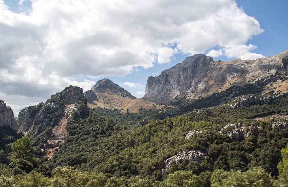 bosque templado en Mallorca
