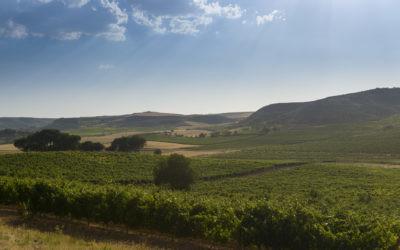 Más allá de la vendimia: descubrimos cómo se elabora un auténtico Ribera del Duero