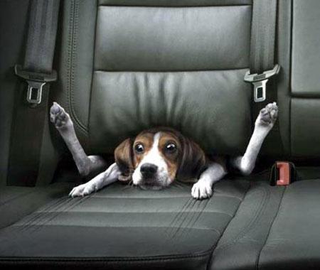 Perro mal transportado