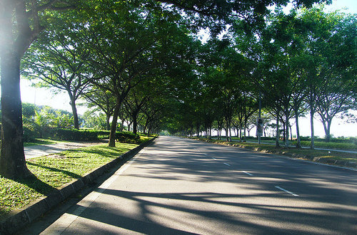 Árboles junto a la carretera