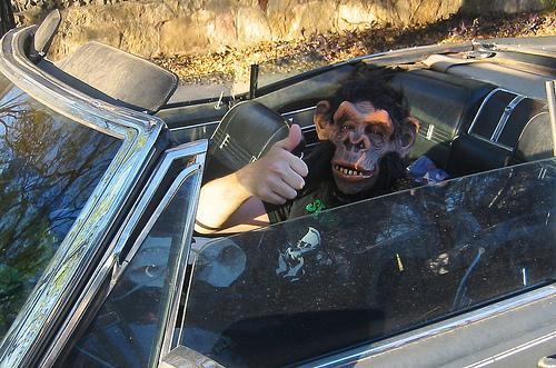 Hombre y animal a los mandos de un vehículo