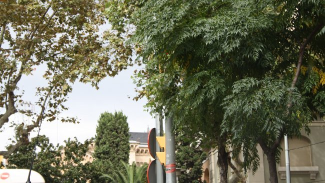 Semáforo oculto entre las ramas