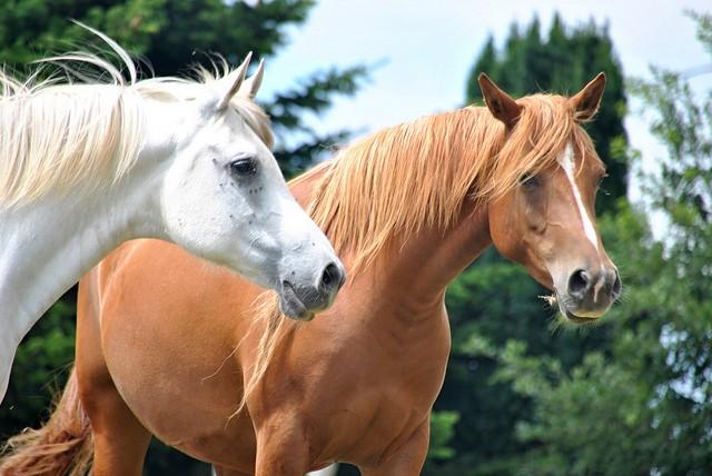 A día de hoy, muchas veces la potencia aún se mide según el número de caballos necesarios para proporcionar la misma potencia