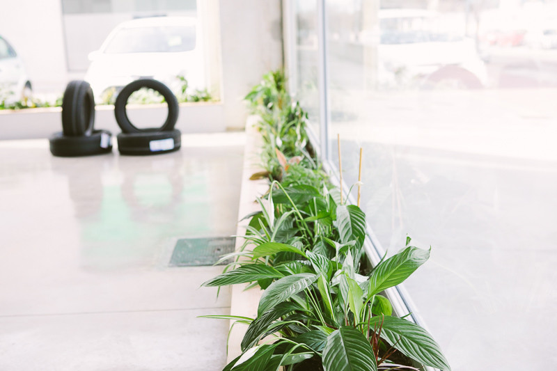 plantas en taller