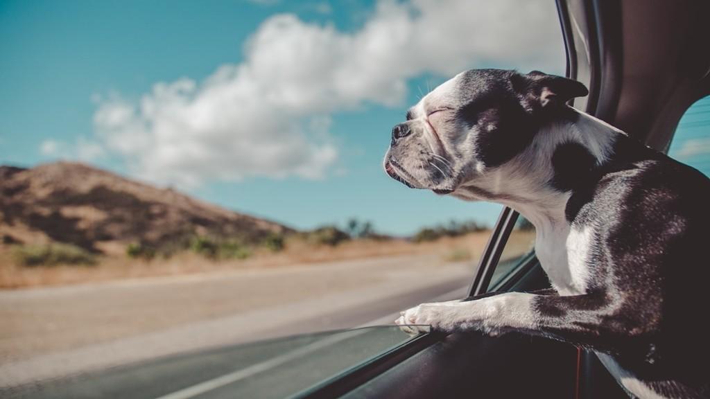 Perro de viaje en verano
