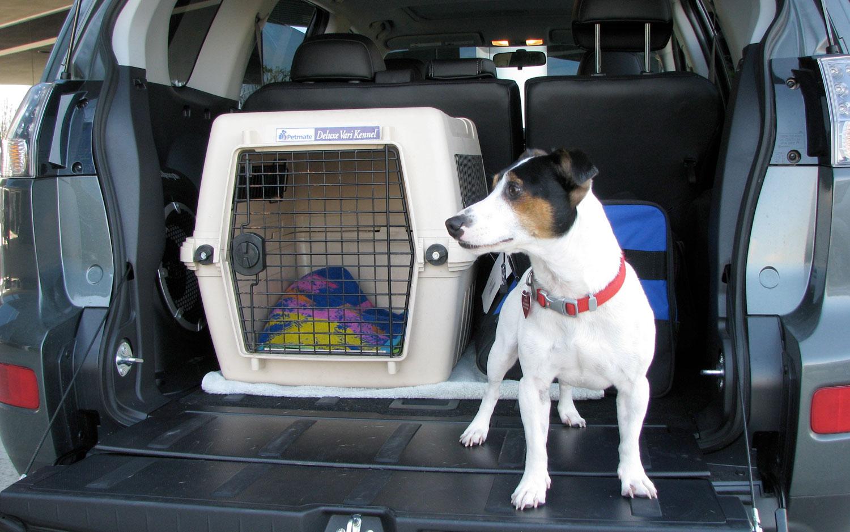 forma de transportar animais
