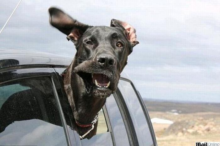 Vai viajar? Saiba como transportar o seu animal de estimação sem que ambos corram perigo.