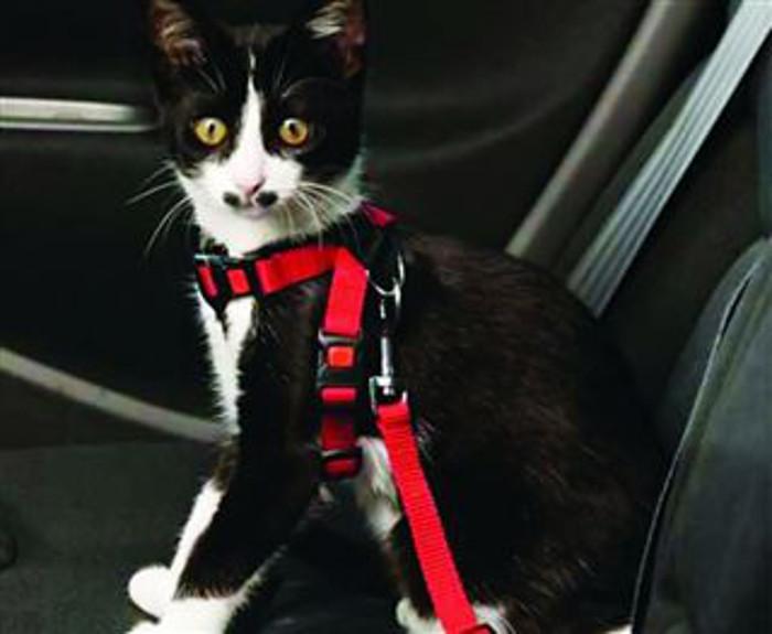 Vai viajar? mSaiba que cuidados deve ter para não colocar em perigo a sua segurança e a do seu animal.