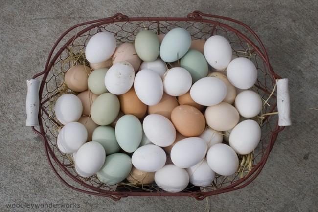 Consumidor huevos - 1