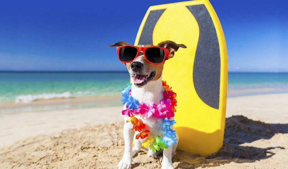 vacaciones_agosto-2