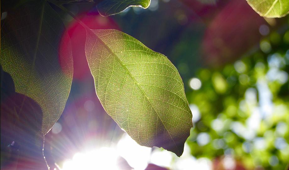 Aire acondicionado para el verano Una planta es suficiente para refrigerar tu vivienda 2