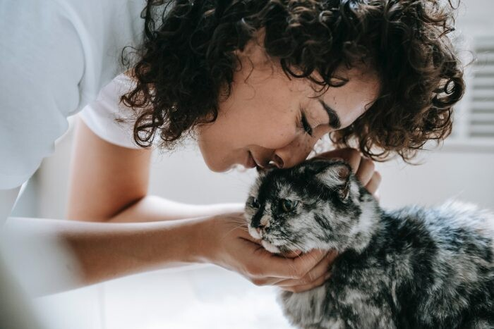 los gatos sienten el embarazo
